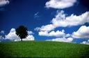 champ, nuages et chene